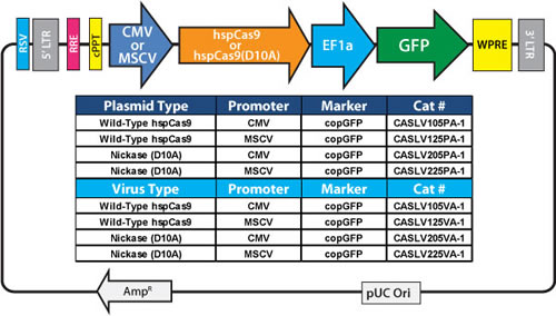 CRISPR Cas9 SmartNuclease Genome Engineering System