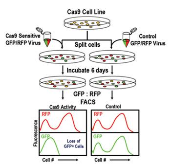 Cas9 Activity Assays