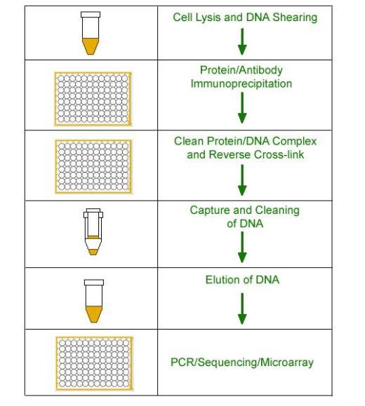 EpiQuik Chromatin Immunoprecipitation Kit, 24 Assays