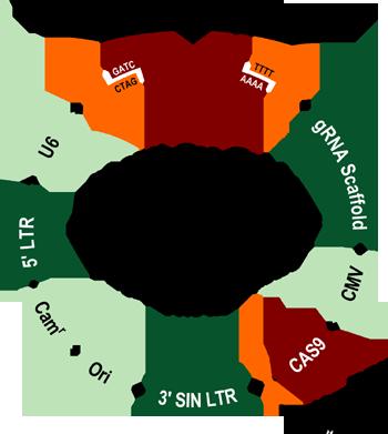 Plenti Cas Guide Crispr Cas9 Cloning Kit Linearized