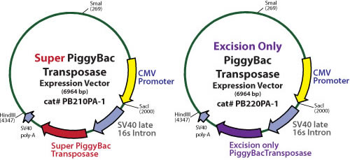 Transposase Expression Vectors