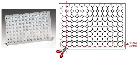 MycoQuick Mycoplasma Detection Kit, 96 reactions
