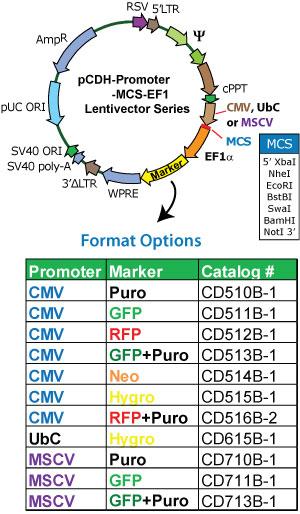 Cmv Promoter Based Pcdh Cmv Mcs Ef1 Gfp T2a Puro Cdna