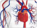 Assays for Cardiovascular Markers