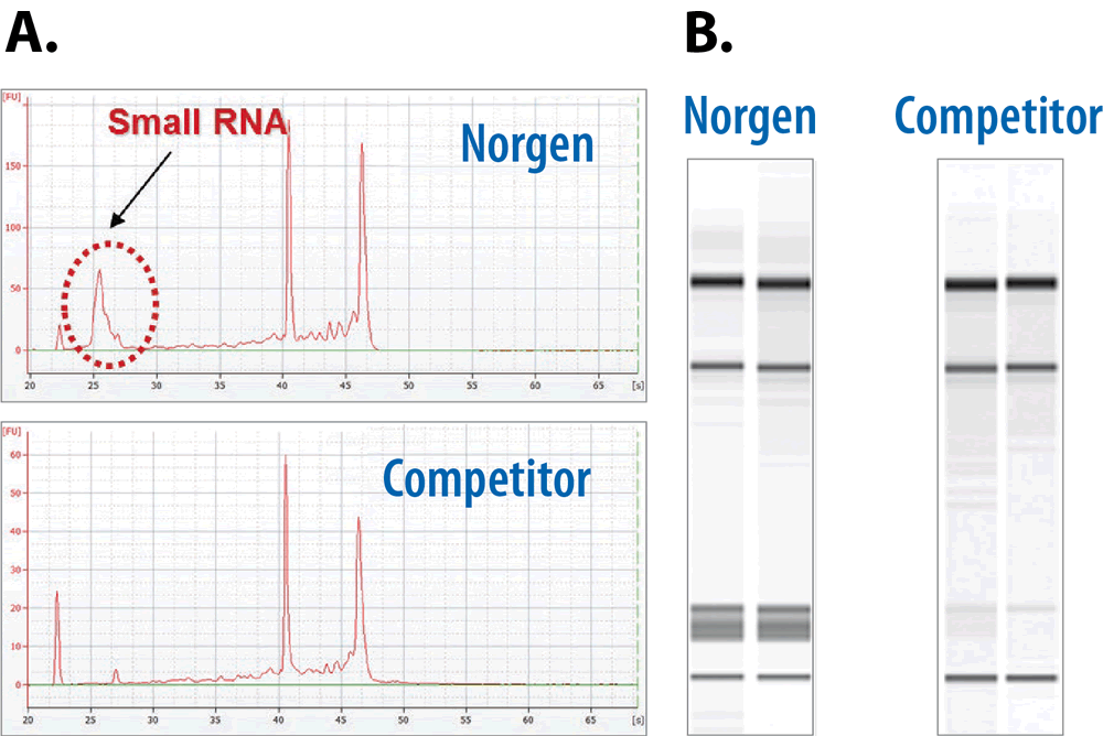 Norgen RNA Purification